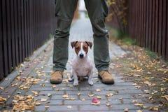 Las- Vegassteckfassungsrussel-Terrier Stockfotos