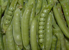 las verduras cosechan los guisantes vegetales orgánicos sanos crudos vegetarianos de la vaina de guisante de la comida verde de l Imagen de archivo