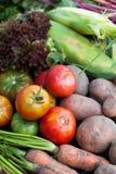 Las verduras estacionales cosechan, comida fresca de la dieta del otoño Planta orgánica del detox fotos de archivo