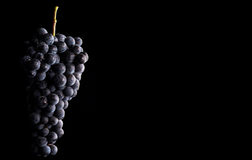 Las vides de uva aisladas, agua caen, tiro macro, backgroun negro Imagen de archivo