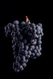Las vides de uva aisladas, agua caen, tiro macro, backgroun negro Foto de archivo