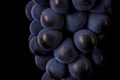 Las vides de uva aisladas, agua caen, tiro macro, backgroun negro Fotos de archivo libres de regalías