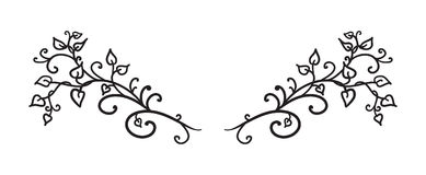 Las vides dibujadas mano salen de rizos y remolinan vector en el párrafo del elemento del diseño o el divisor de lujo del texto,  libre illustration