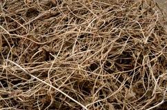 Las vides secas del corte del marrón uniformemente se texturizan entrelazadas en la tierra Fotografía de archivo