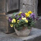 Las violetas artificiales en un pote, como adorno de la entrada a un café, se colocan en piedras de pavimentación Imagen de archivo