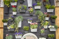 Las violetas, hiedra, chlorophytum, narcisos en potes adornan la pared decorativa en el jardín botánico Fotos de archivo