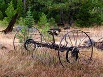 Las vueltas del bosque Fotografía de archivo libre de regalías