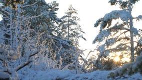 Las w śniegu Finlandia zdjęcie wideo