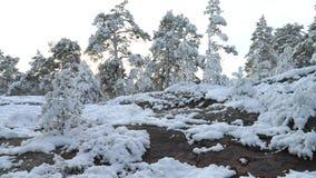 Las w śniegu Finlandia zbiory wideo