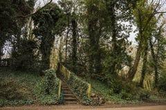 Las w Anglia Zdjęcie Stock
