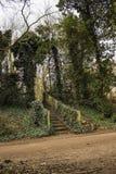 Las w Anglia Obrazy Stock