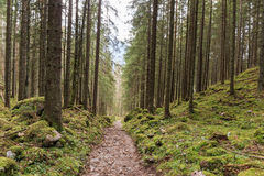 Las w Berchtesgaden Zdjęcia Stock