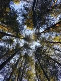 Las w Canada Zdjęcia Royalty Free