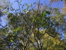 Las, w górę widoku na drzewach Obraz Royalty Free