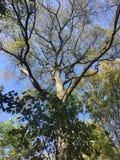 Las, w górę widoku na drzewie Obrazy Royalty Free