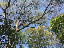 Las, w górę widoku na drzewie Fotografia Stock