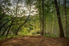 Las w górach w lecie zdjęcie royalty free