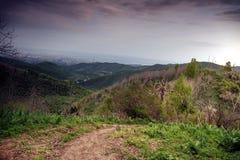 Las w górach w lecie obraz royalty free