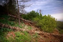 Las w górach w lecie obrazy stock
