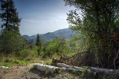 Las w górach w lecie obraz stock
