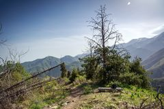 Las w górach w lecie fotografia royalty free
