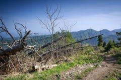 Las w górach w lecie obrazy royalty free