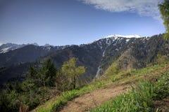 Las w górach w lecie zdjęcia stock