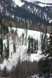Las w górach w Sochi zdjęcia royalty free