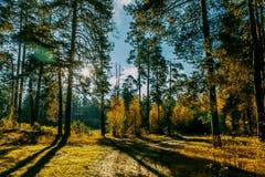 Las w jesień czasie fotografia stock