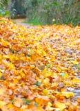 Las w jesieni Obraz Stock