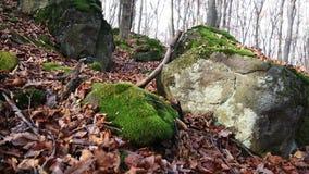 Las w jesieni zbiory