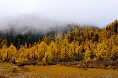 Las w jesieni Zdjęcie Stock