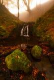 Las w jesieni Obraz Royalty Free