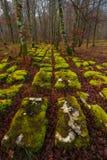 Las w jesieni Zdjęcia Royalty Free