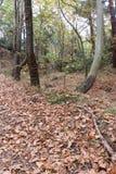 Las w jesieni Drzewa i kolor żółty liście zdjęcia stock