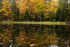 Las w jeziorze obrazy royalty free
