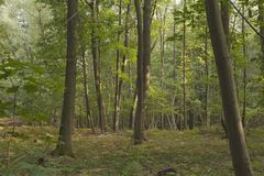 Las w lecie Obrazy Royalty Free
