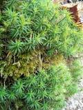 Las w lesie Zdjęcia Stock