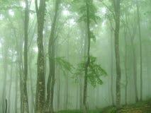 Las w mgle Obrazy Royalty Free