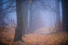 Las w mgle Fotografia Stock