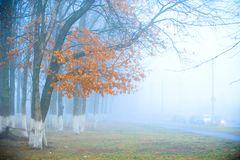 Las w mgle Obraz Royalty Free