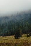 Las w mgle Obraz Stock