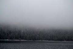 Las w mgle Zdjęcie Stock