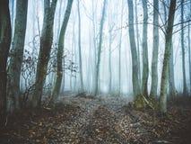 Las w mgle Zdjęcia Royalty Free