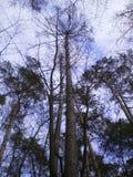 Las w mieście Obrazy Royalty Free