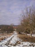 Las w mieście Zdjęcia Stock