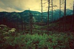Las w mountanis Zdjęcia Stock
