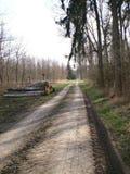 Las w naturze Zdjęcia Royalty Free