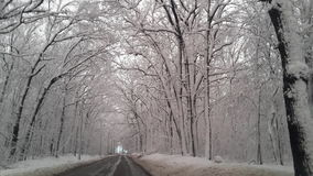 Las w śniegu fotografia stock