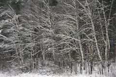 Las w opóźnionej jesieni zdjęcia royalty free